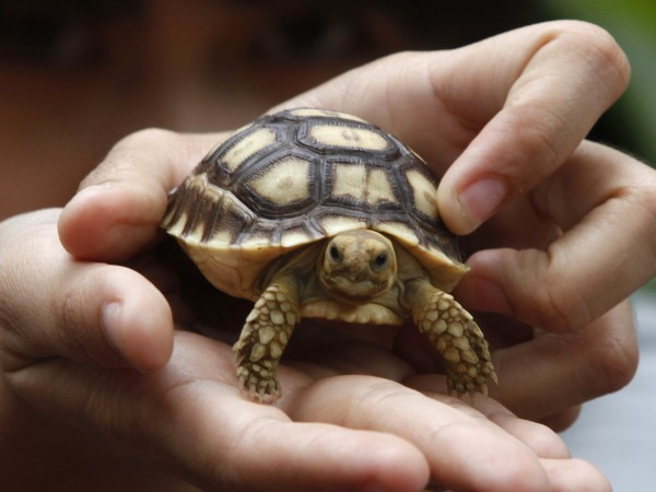 Снимка: Най-възрастният домашен любимец – костенурка на 121 г.