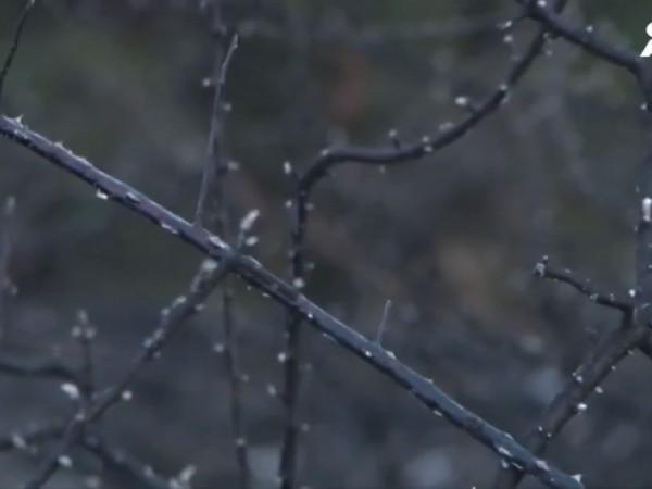 Нов горски пожар е избухнал този следобед между селата Владо