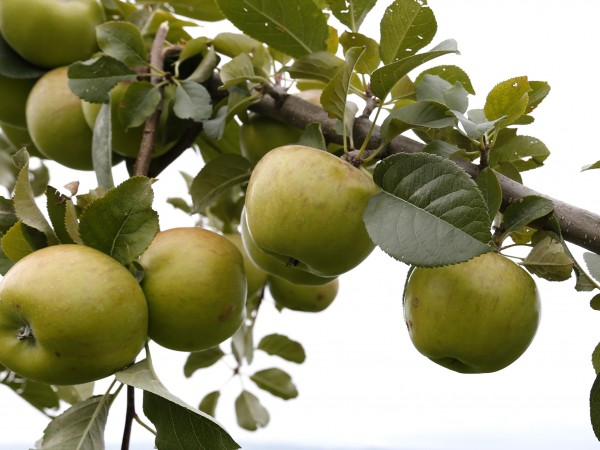 Министерство на земеделието настоява плодовете, зеленчуците и суровото мляко, произведени