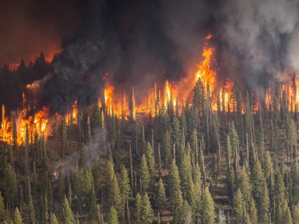 Снимка: 10 области в страната с голяма опасност от пожари