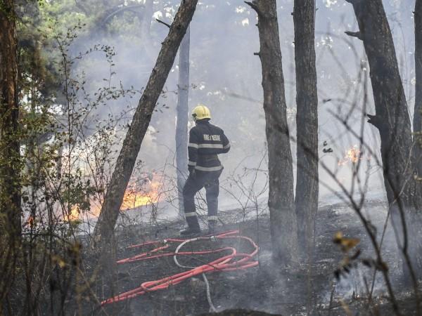 "Пожар обхвана района около двореца ""Кричим"". Над 20 огнеборци са"