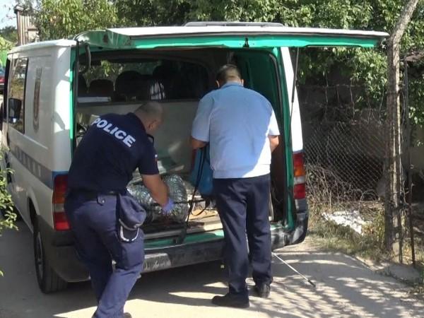 Насаждения от над 200 растения канабис откриха полицейски служители край
