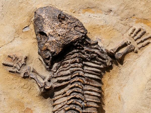 Снимка: Динозаврите от Трън са били дребни, живеели на остров