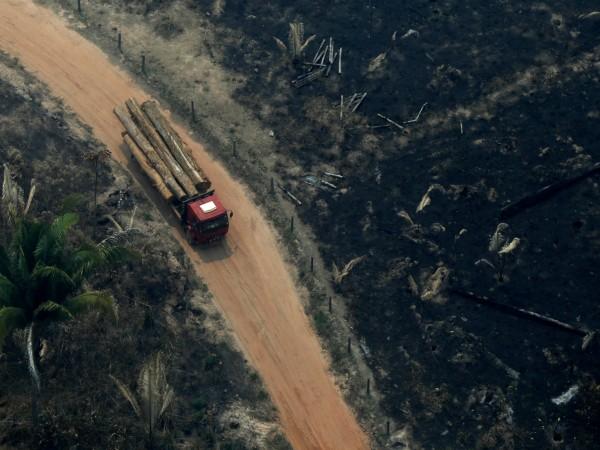 """""""Сечем горите, за да оцелеем"""", казва пред Франс прес фермерът"""