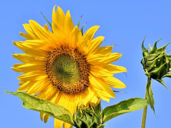 Днес времето ще бъде предимно слънчево с временни увеличения на