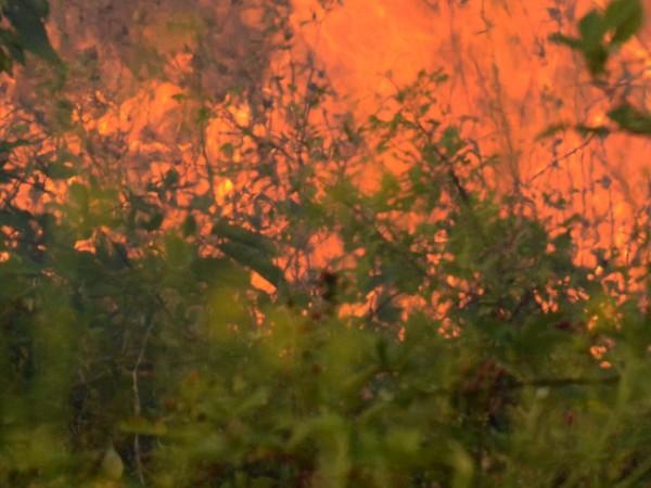 Петдесет декара резене са изгорели при пожар в района на