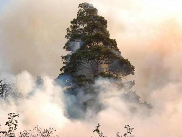 Пожарът, който възникна на 14 септември в местността Сухото езеро