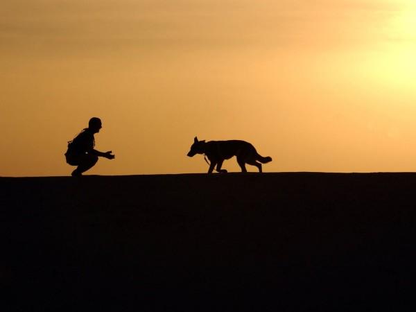 Какъвто господарят, такова и кучето му. Дебелите хора в редица