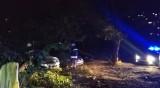 Дърво падна в столицата, затисна 3 коли