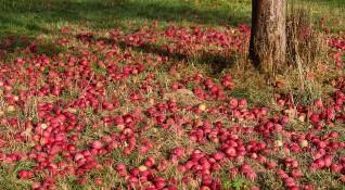 Овощарите недоволни: Дават ни малко пари, внасят чужди плодове