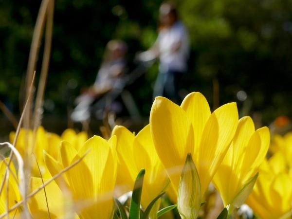 Предимно слънчево ще е времето и през днешния октомврийски ден.