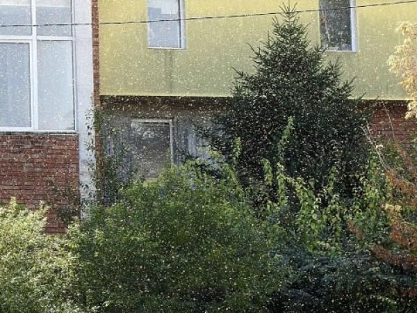 Напаст от мушици в Разград притеснява хората в града. Заради