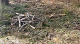 Горски задържаха 80 кубика незаконна дървесина