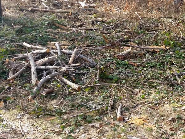 Снимка: Горски задържаха 80 кубика незаконна дървесина