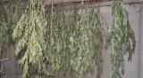 Удар във Видинско: 42 кг канабис в необитавана къща