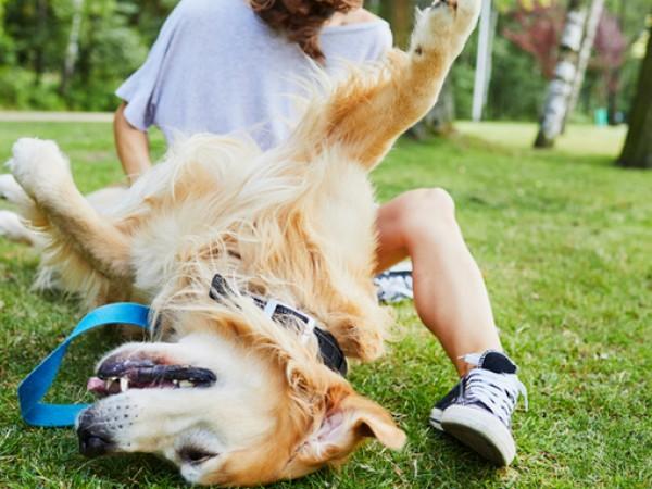 Кучетата са най-добрите приятели на човека. Готови са да раздават