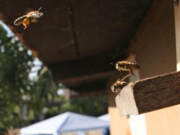 Пчелари протестират тази вечер пред Министерството на земеделието. Искането им