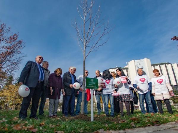 Засаждат лирово дърво край НДК в памет на хората, дарили