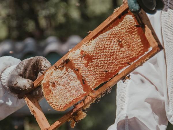 Пчелари на протест тази вечер пред Министерство на земеделието, храните