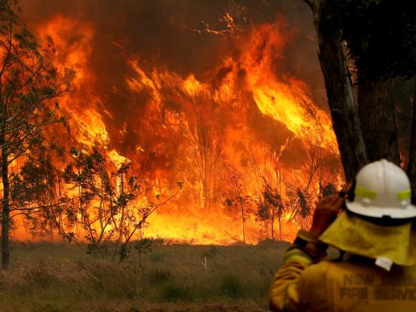 Жертвите на опустошителните пожари, които бушуват в Австралия от петък,