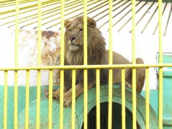 Районната прокуратурата в Разград ще разследва зоокъта в града заради