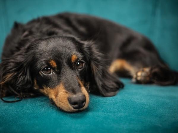Опасна отрова, която убива кучета, е разпръсната в столичния квартал