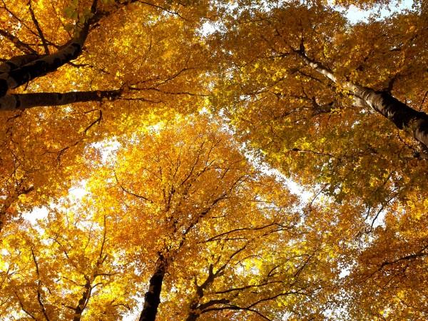 Тази есен температурите в София няма да са отрицателни. Това
