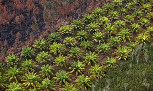 Обезлесяването в бразилска Амазония стигна рекорд