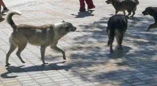 Helpbook алармира: Глутници от кучета, дупки по пътищата
