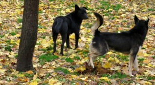 Заради ухапване: Собственичка на куче плаща 4500 лв