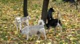 Бездомните кучета в София се стопиха с близо 70%