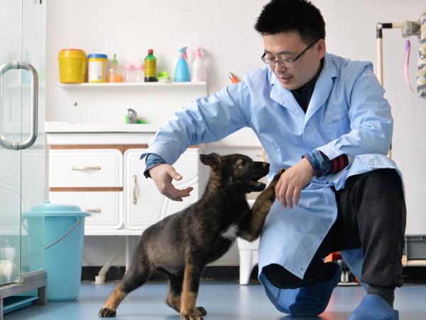 Китайски експерти са взели ДНК от вече доказали се кучета