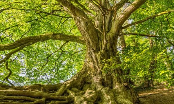 Според зодията: Какво дърво си и какво означава?