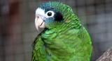 Кражба на рядък и ценен вид папагал в Добрич