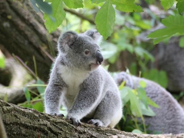 Местните власти в австралийския щат Куинсланд планират да обособят терени