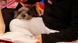 Кучето – мотиватор: Децата четат повече с четириного в стаята
