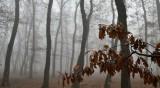 Времето в четвъртък: Пак облаци, мъгли, на места и ще вали