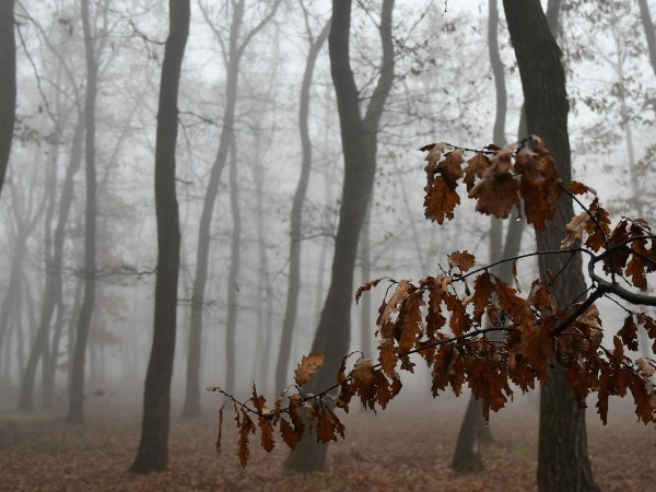 Утре ще преобладава облачно, в равнините и мъгливо време. На