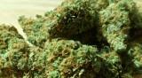 Двама в ареста за притежание на 4 кг марихуана