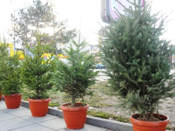 Над 26 000 елхи планира да осигури за пазара Южноцентралното