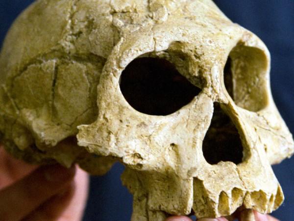 Австралийски учени установиха, че последните представители на вида Хомо еректус