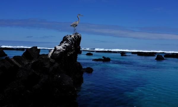 Над 2 т. гориво се изляха край Галапагоските острови