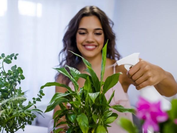 Ползите от растенията в дома са наистина многобройни. Ще се