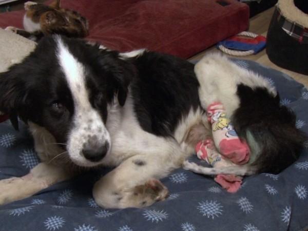 Кучето Лъки е открито захвърлено на брега на кърджалийския язовир