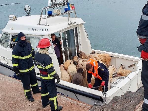 Втори шанс за живот получиха 180 овце, които бяха спасени