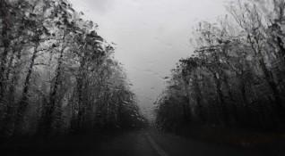 В Австралия дочакаха – след месеци суша заваля дъжд