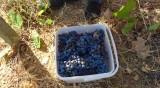 Безвъзмездната помощ за популяризиране на вино в чужбина става 80%
