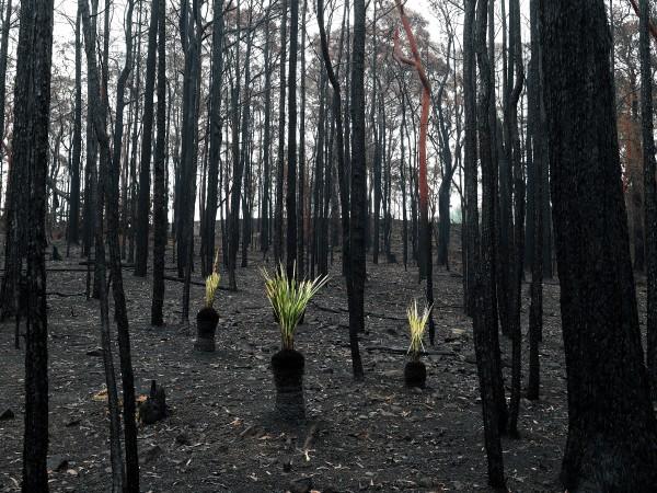 Средства за справяне с щетите от пожарите в Австралия събират