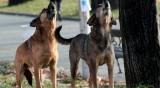 Бездомни кучета нападнаха пенсионерка, травмите й са сериозни