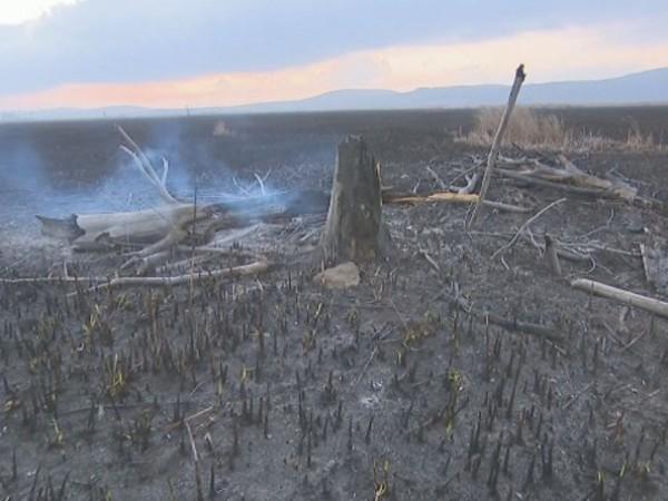 Около една трета от площта на Драгоманското блато е изгоряла,